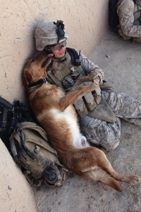 A beautiful picture of trust and the love between dogs and people.