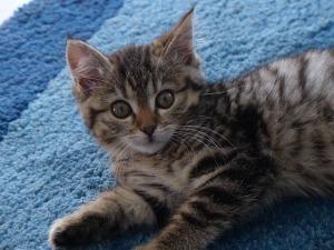 kitten-647501_640