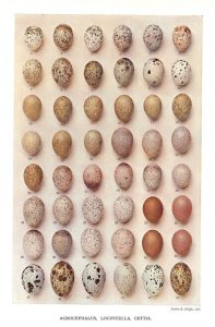 victorian-egg-painting