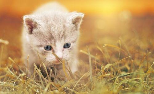 cat-1992140__480